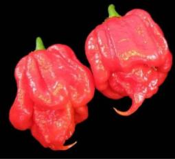 Trinidad chili magok